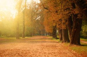 cómo nos afecta el otoño al estado de ánimo